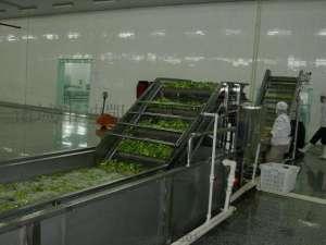 叶菜类加工流水线1