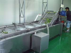 紫苏叶清洗加工设备