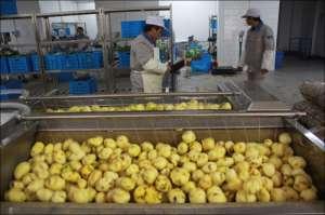 土豆毛刷清洗机1